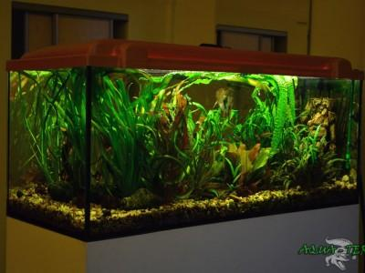 akwarium roślinne 01