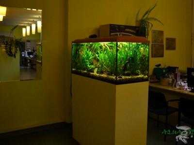 akwarium roślinne 02