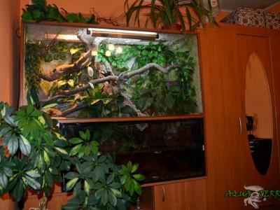 terrarium dla agamy błotnej 01