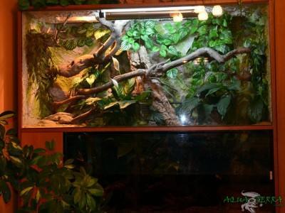 terrarium dla agamy błotnej 02