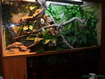 terrarium dla agamy błotnej 03