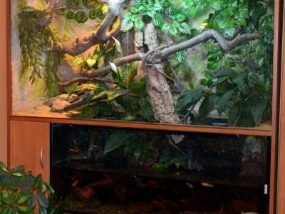 terrarium dla agamy błotnej 04