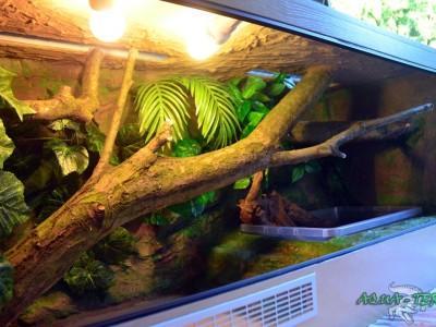 terrarium dla agamy błotnej 05