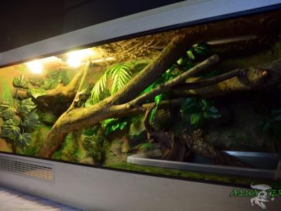 terrarium dla agamy błotnej 06