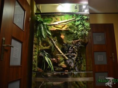 terrarium dla legwana zielonego 01