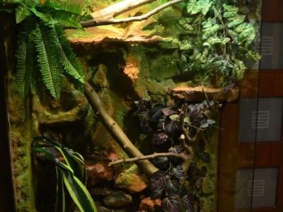 terrarium dla legwana zielonego 03