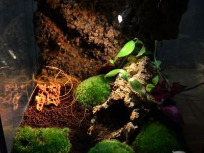 terrarium dla pająka 02