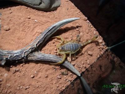 terrarium dla skorpiona 02